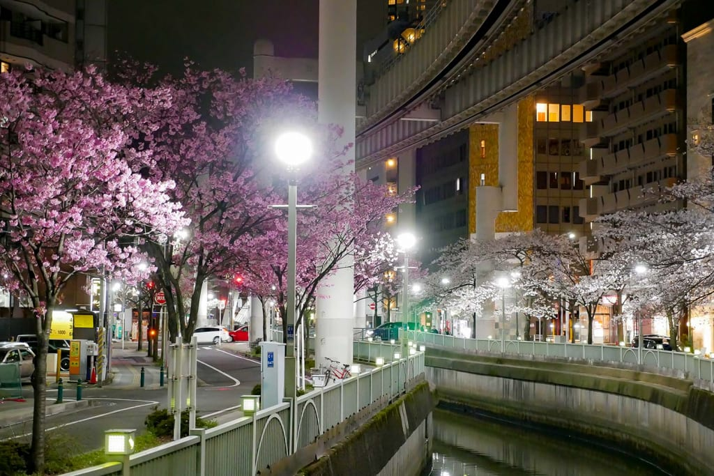 千葉栄町 ソープランド街 ベガスの近く 葭川 桜 夜景